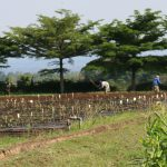 The farmers' forum is expected to present a petition to the upcoming East African Community heads of state summit signed by one million farmers. PHOTO: Burundi Times